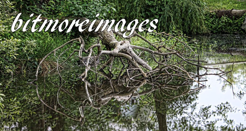 bitmore banner zoo trees1